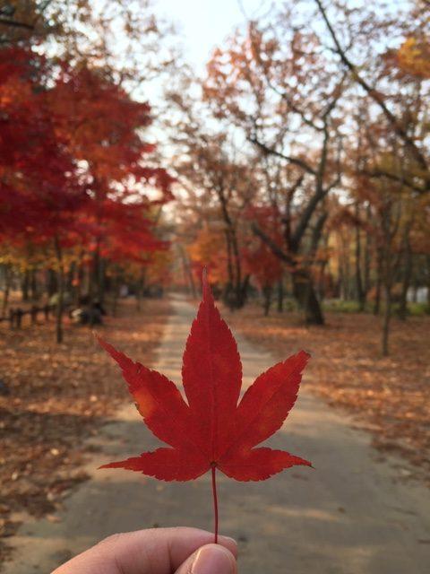 South Korea in Autumn : Preparation